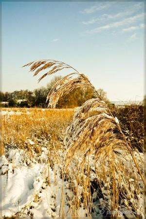 De winter van 2010 krijgt van mij een pluim!