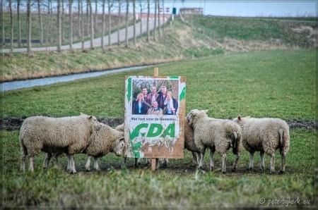 Gemeenteraadsverkiezingen 2006 - Politiek geïnteresseerde schapen